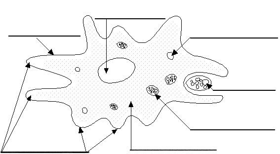 rete intercultura  materiali didattici scienze