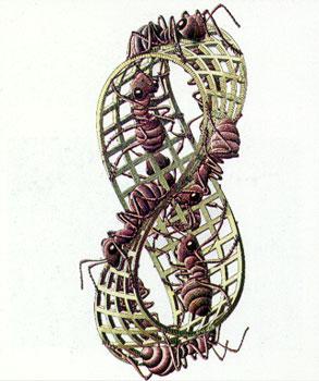nastro di moebius con formiche
